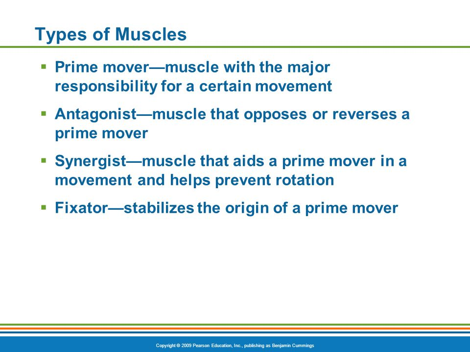 Copyright © 2009 Pearson Education, Inc., publishing as Benjamin Cummings Types of Muscles  Prime mover—muscle with the major responsibility for a ce