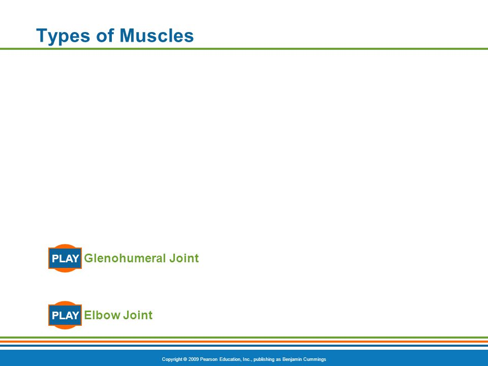 Copyright © 2009 Pearson Education, Inc., publishing as Benjamin Cummings Types of Muscles Elbow Joint PLAY Glenohumeral Joint PLAY