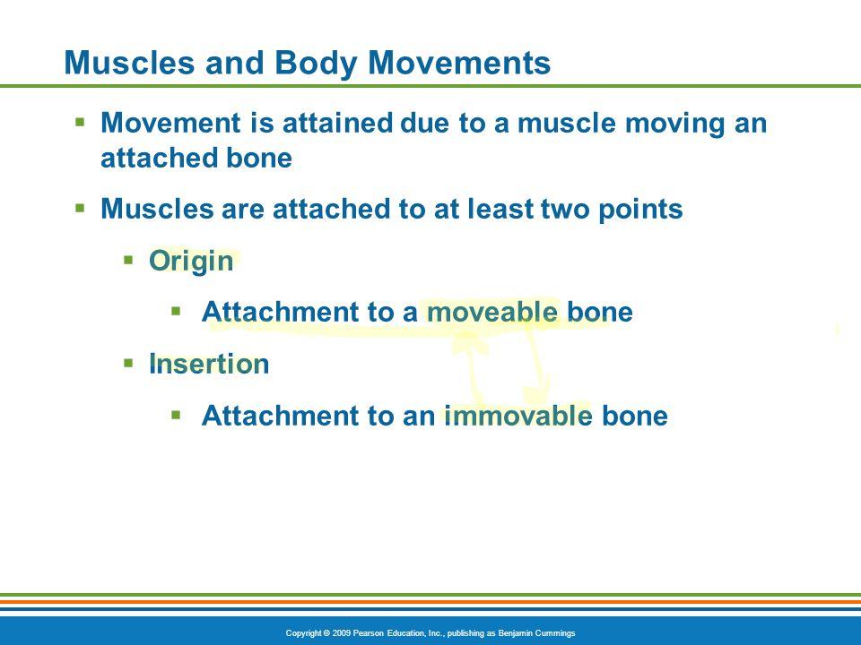 Copyright © 2009 Pearson Education, Inc., publishing as Benjamin Cummings Types of Ordinary Body Movements Wrist Circumduction PLAY Humerus Circumduction PLAY Figure 6.13d