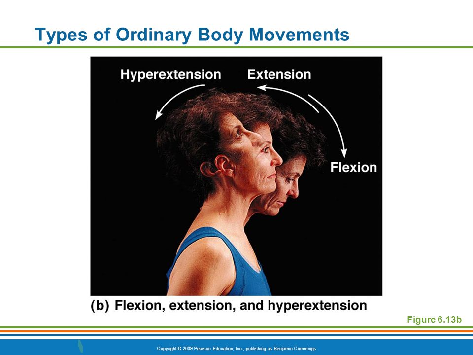 Copyright © 2009 Pearson Education, Inc., publishing as Benjamin Cummings Types of Ordinary Body Movements Elbow Joint and Forearm PLAY Wrist Flexion/Extension PLAY Elbow Flexion/Extension PLAY