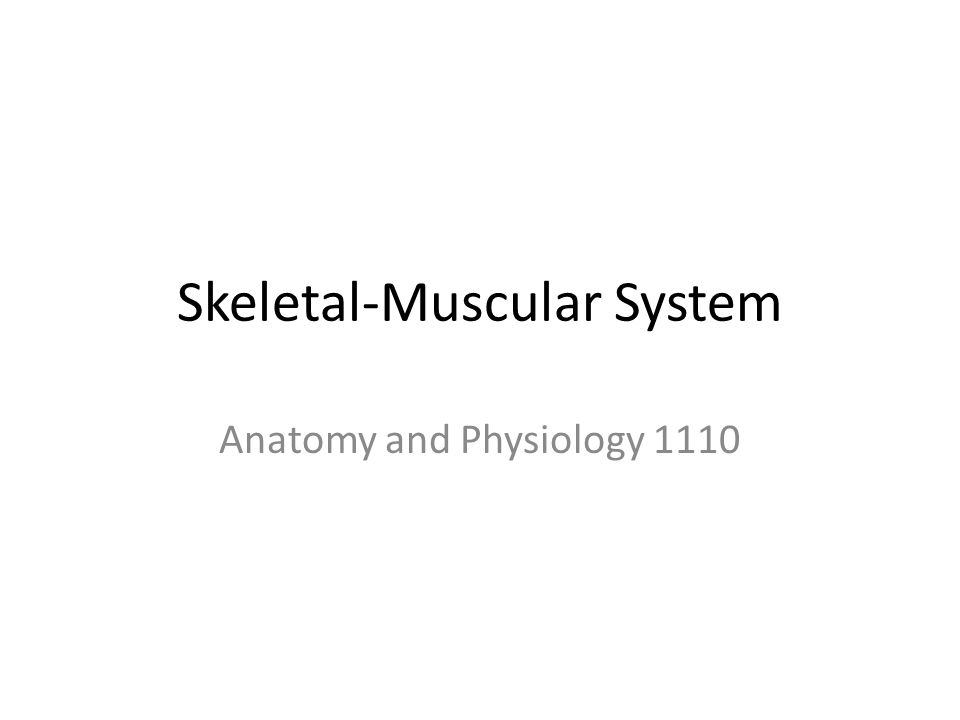 Skeletal-Muscular System Anatomy and Physiology 1110