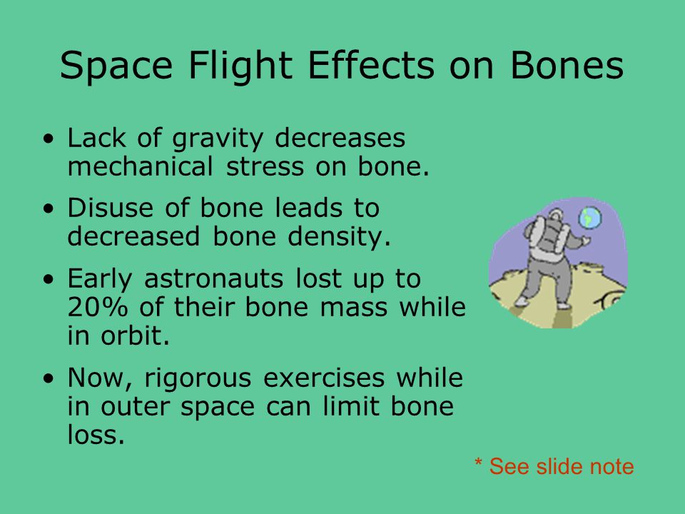Space Flight Effects on Bones Lack of gravity decreases mechanical stress on bone.
