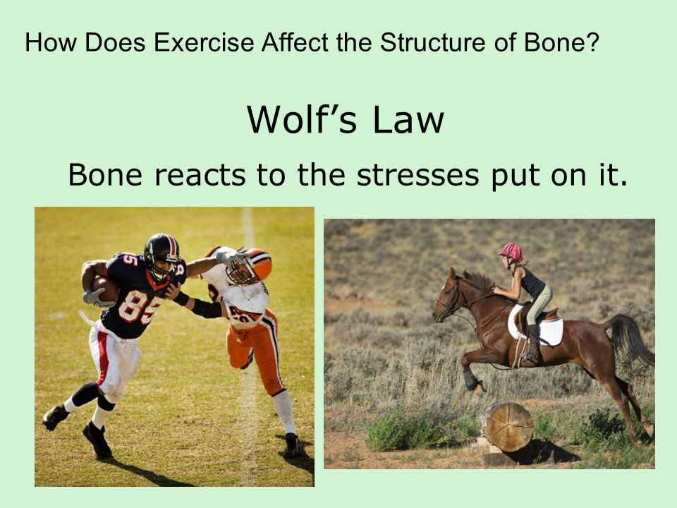 Athletes Studies have shown that weight- bearing physical activity by athletes increases bone density.