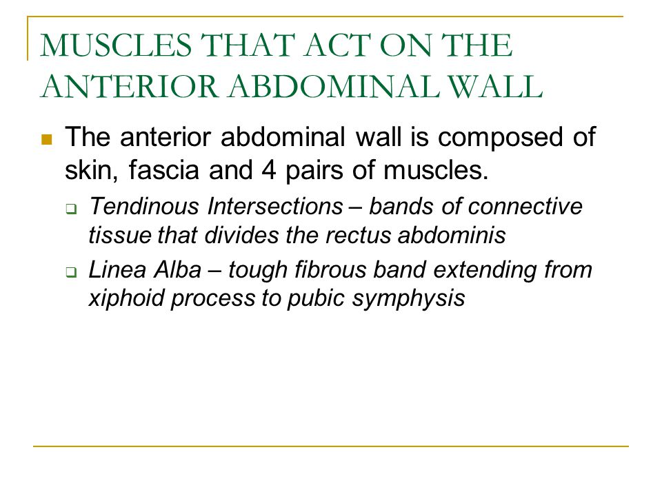 The anterior abdominal wall is composed of skin, fascia and 4 pairs of muscles.  Tendinous Intersections – bands of connective tissue that divides th