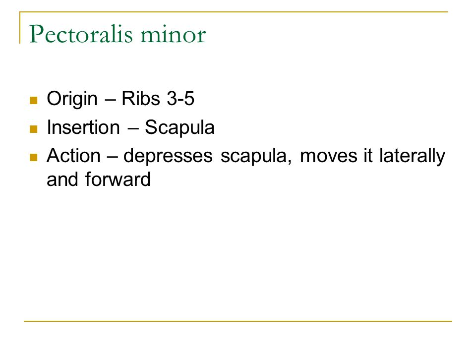 Origin – Ribs 3-5 Insertion – Scapula Action – depresses scapula, moves it laterally and forward Pectoralis minor