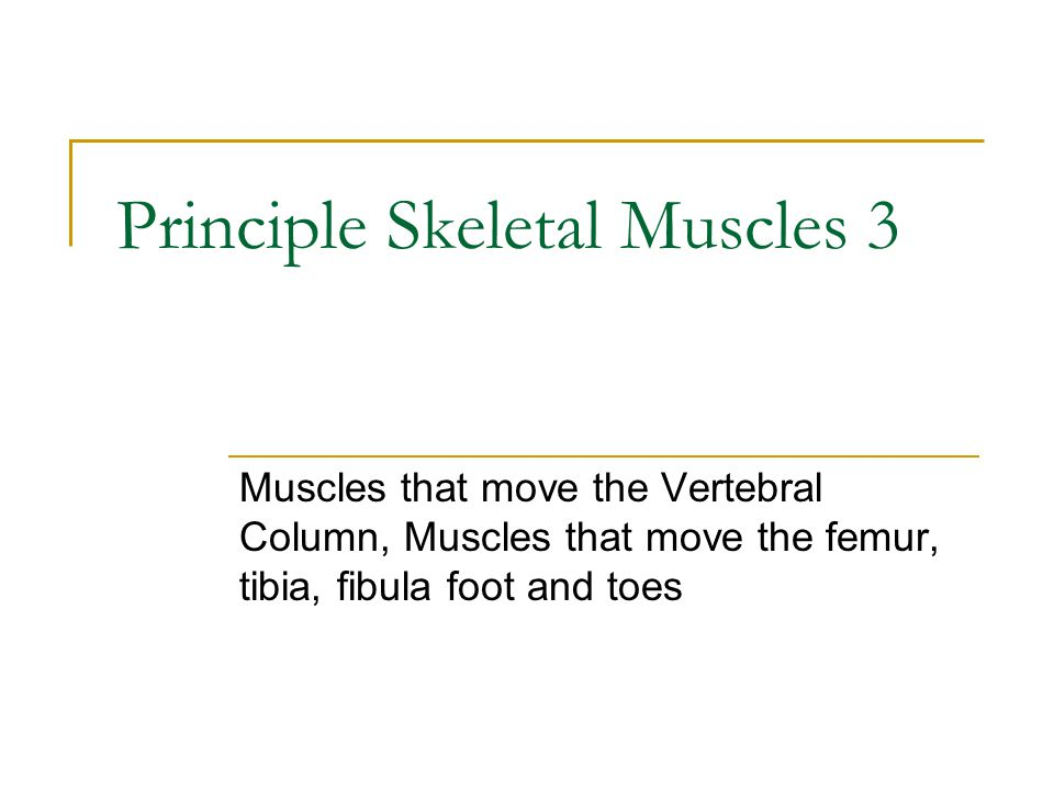 Principle Skeletal Muscles 3 Muscles that move the Vertebral Column, Muscles that move the femur, tibia, fibula foot and toes