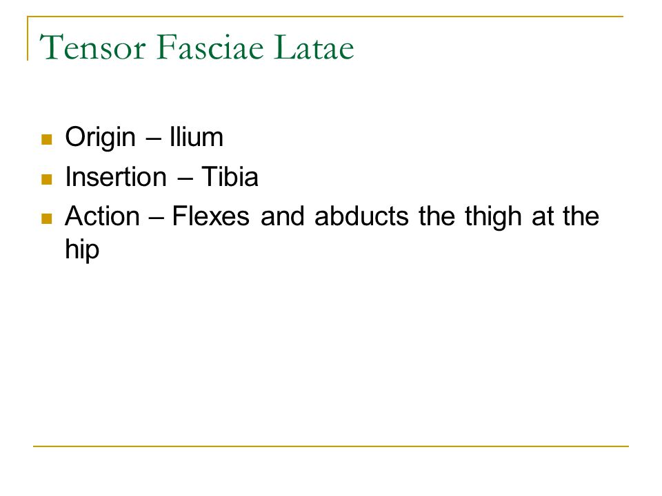 Tensor Fasciae Latae Origin – Ilium Insertion – Tibia Action – Flexes and abducts the thigh at the hip