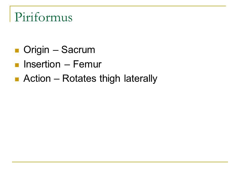 Piriformus Origin – Sacrum Insertion – Femur Action – Rotates thigh laterally