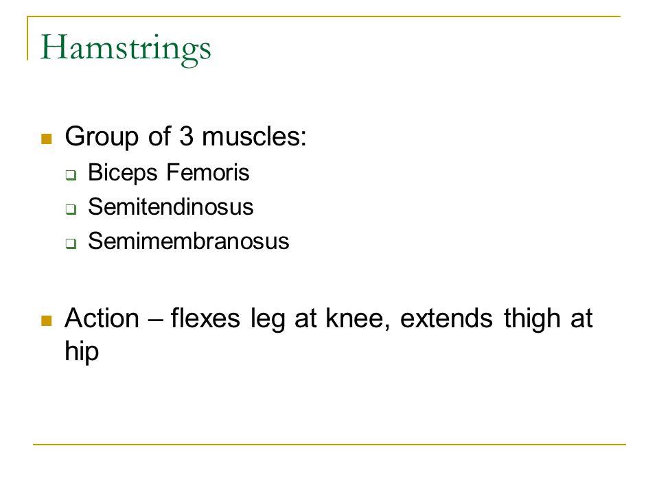 Hamstrings Group of 3 muscles:  Biceps Femoris  Semitendinosus  Semimembranosus Action – flexes leg at knee, extends thigh at hip