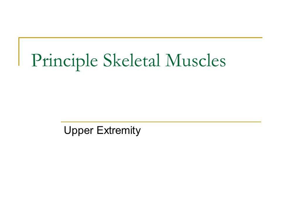 Principle Skeletal Muscles Upper Extremity