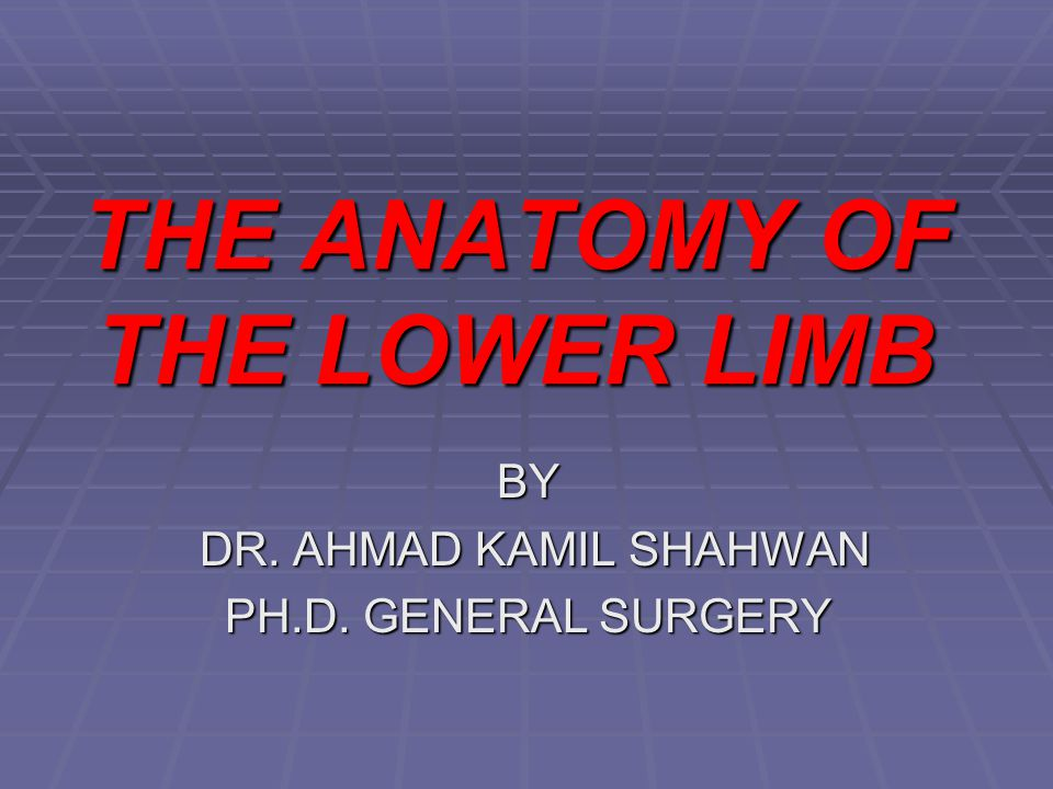 THE ANATOMY OF THE LOWER LIMB BY DR. AHMAD KAMIL SHAHWAN DR. AHMAD KAMIL SHAHWAN PH.D. GENERAL SURGERY