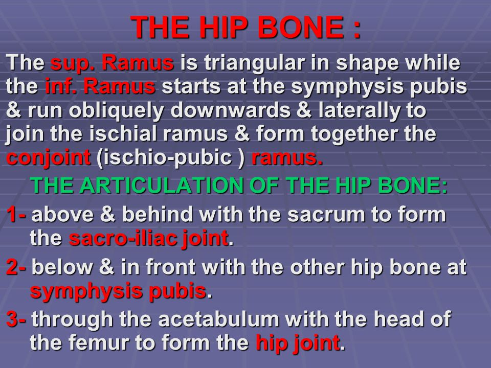 THE HIP BONE : The sup. Ramus is triangular in shape while the inf. Ramus starts at the symphysis pubis & run obliquely downwards & laterally to join