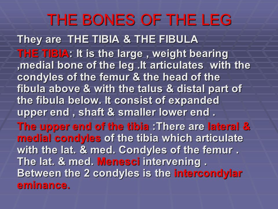 THE BONES OF THE LEG They are THE TIBIA & THE FIBULA THE TIBIA: It is the large, weight bearing,medial bone of the leg.It articulates with the condyle