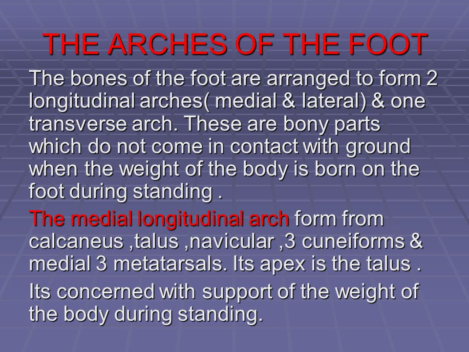 THE ARCHES OF THE FOOT The bones of the foot are arranged to form 2 longitudinal arches( medial & lateral) & one transverse arch. These are bony parts