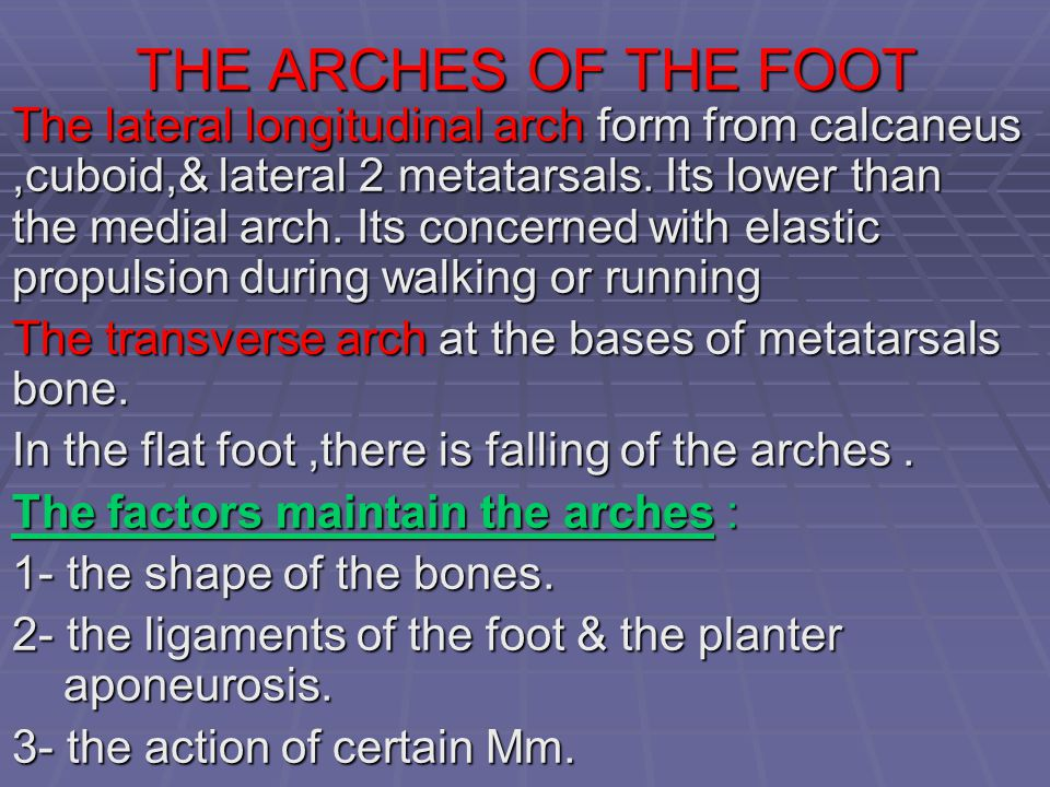 THE ARCHES OF THE FOOT The lateral longitudinal arch form from calcaneus,cuboid,& lateral 2 metatarsals. Its lower than the medial arch. Its concerned