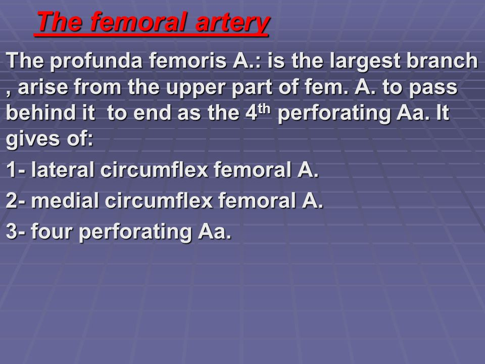 The femoral artery The profunda femoris A.: is the largest branch, arise from the upper part of fem. A. to pass behind it to end as the 4 th perforati