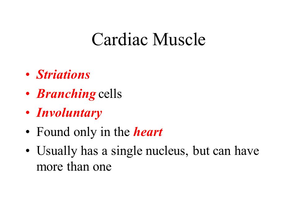 Cardiac Muscle Striations Branching cells Involuntary Found only in the heart Usually has a single nucleus, but can have more than one