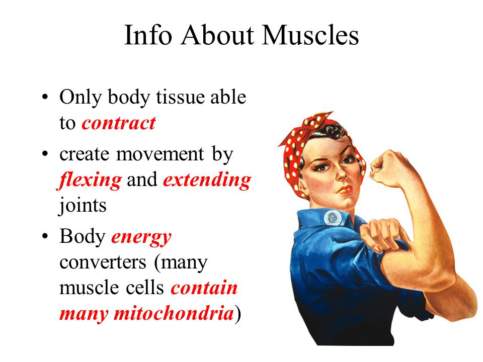 Info About Muscles Only body tissue able to contract create movement by flexing and extending joints Body energy converters (many muscle cells contain