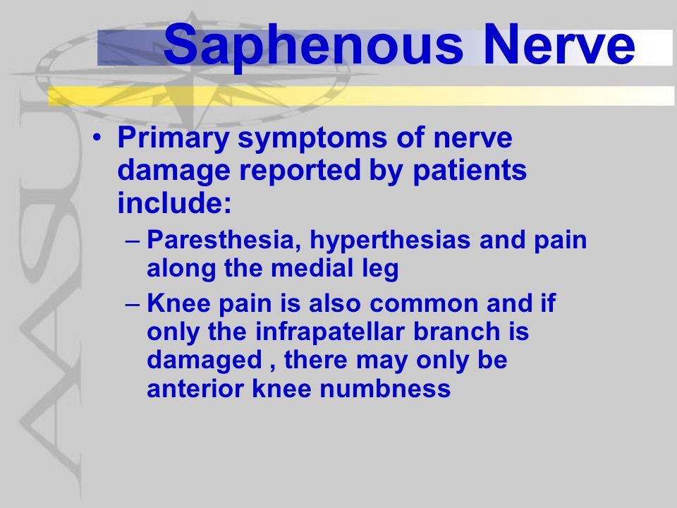 Saphenous Nerve Diagnosis is done with the following findings: –  SNAP of saphenous nerve –No weakness in quadriceps femoris muscles –Normal EMG findings in quadriceps femoris, hip adductors and iliacus –Occasionally + Tinel sign over subsartorial canal