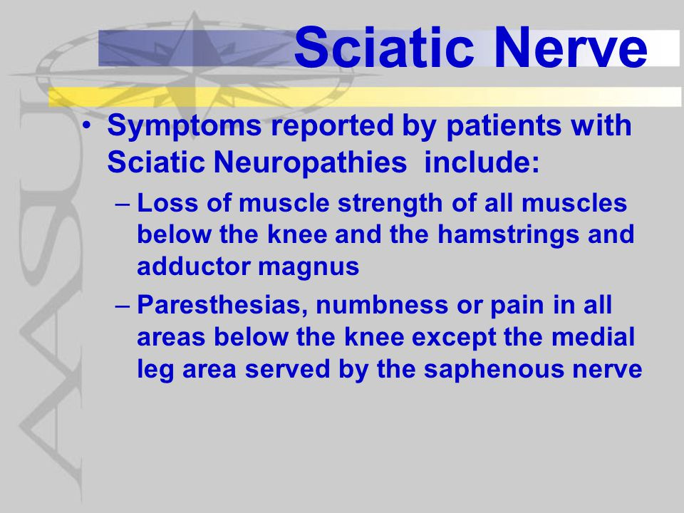 Sciatic Nerve In partial injury common peroneal nerve more vulnerable because fewer axons than tibial nerve more exposed to traction injury being tightly secured at fibular head and sciatic notch.