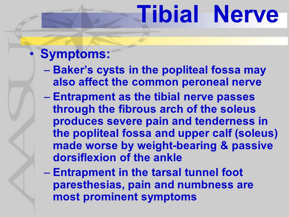 Tibial Nerve Diagnosis: –History of tibial nerve symptoms with symptoms most unique to tibial nerve being: Hypersensitivity of the foot initially or after nerve repair Insensitivity of the foot with axonal loss and foot ulcerations –Imaging studies can show some obstructions and diagnosis fractures –EMGs, SNAPs, CMAPs and H-reflex testing