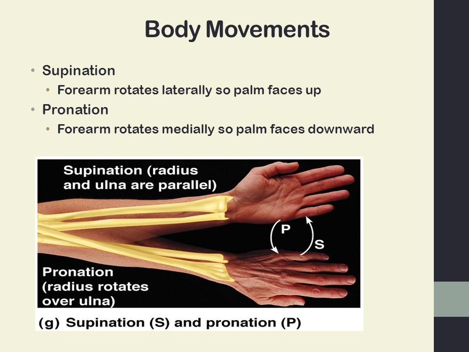 Body Movements Supination Forearm rotates laterally so palm faces up Pronation Forearm rotates medially so palm faces downward