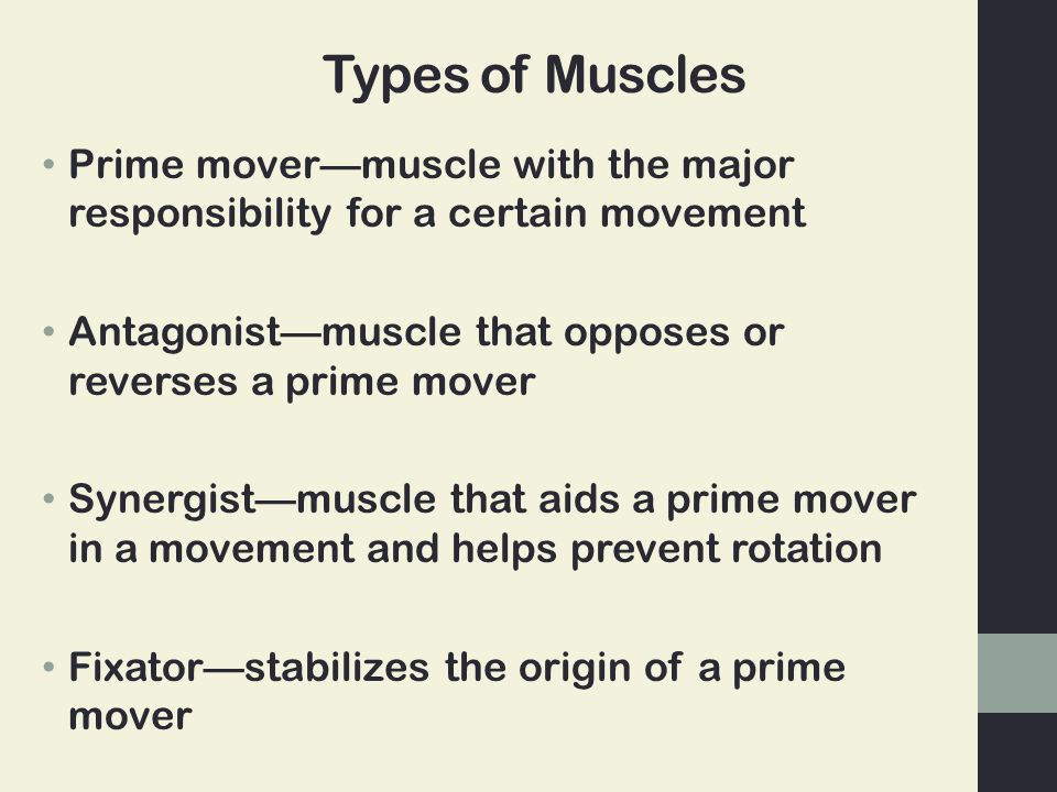 Types of Muscles Prime mover—muscle with the major responsibility for a certain movement Antagonist—muscle that opposes or reverses a prime mover Syne