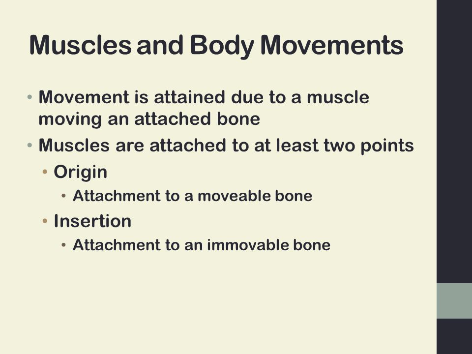 Muscles and Body Movements Movement is attained due to a muscle moving an attached bone Muscles are attached to at least two points Origin Attachment