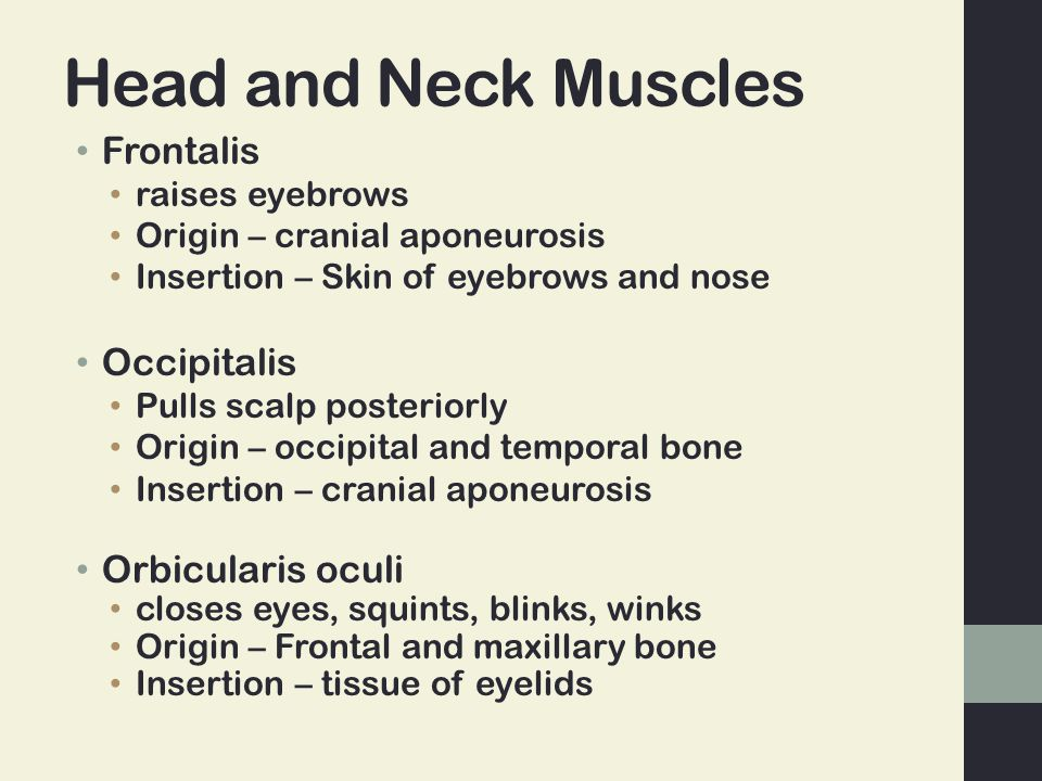 Head and Neck Muscles Frontalis raises eyebrows Origin – cranial aponeurosis Insertion – Skin of eyebrows and nose Occipitalis Pulls scalp posteriorly