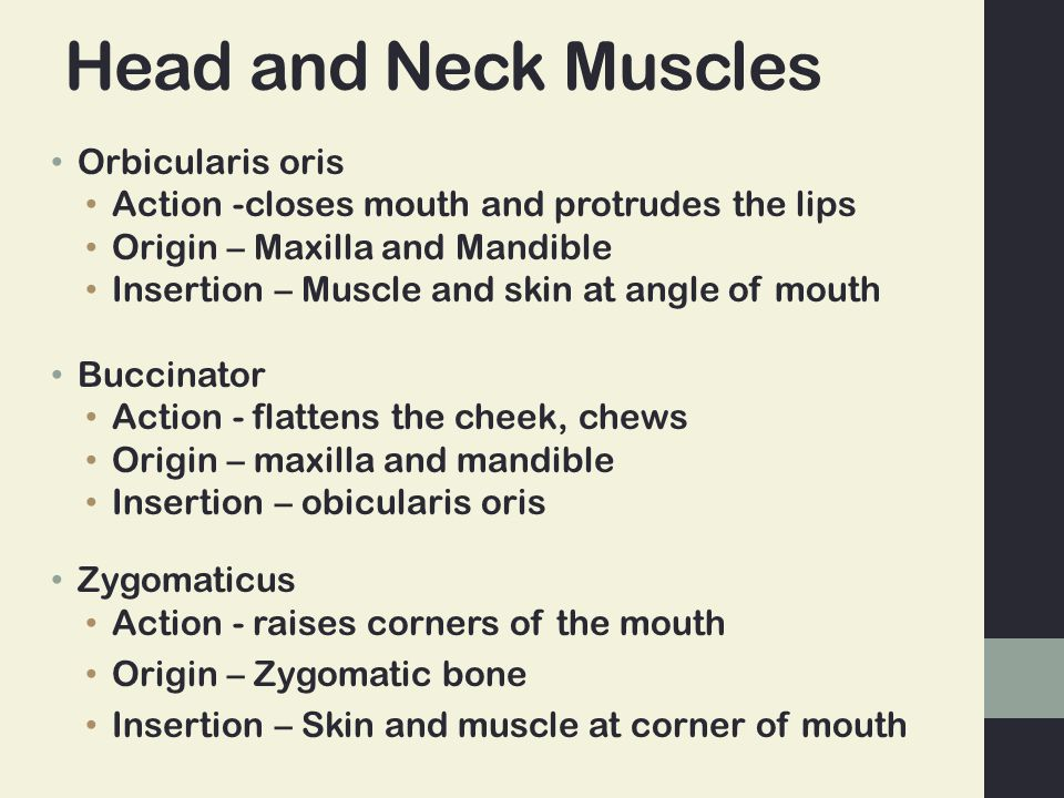 Head and Neck Muscles Orbicularis oris Action -closes mouth and protrudes the lips Origin – Maxilla and Mandible Insertion – Muscle and skin at angle