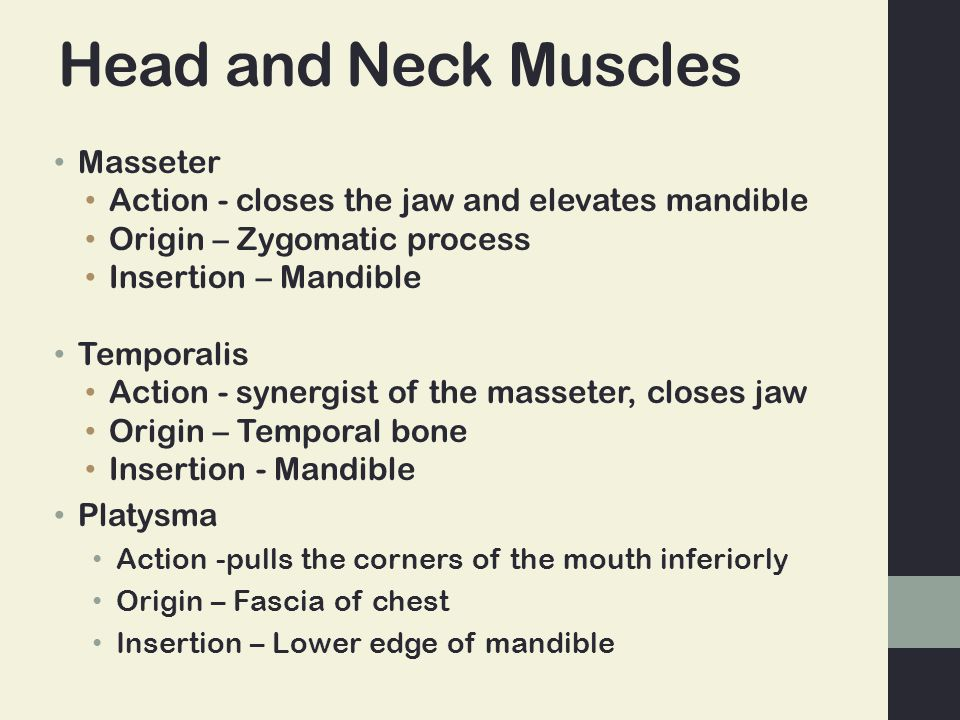 Head and Neck Muscles Masseter Action - closes the jaw and elevates mandible Origin – Zygomatic process Insertion – Mandible Temporalis Action - synergist of the masseter, closes jaw Origin – Temporal bone Insertion - Mandible Platysma Action -pulls the corners of the mouth inferiorly Origin – Fascia of chest Insertion – Lower edge of mandible