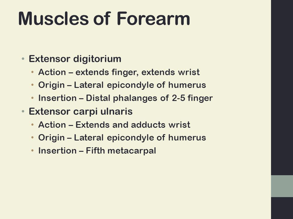Muscles of Forearm Extensor digitorium Action – extends finger, extends wrist Origin – Lateral epicondyle of humerus Insertion – Distal phalanges of 2