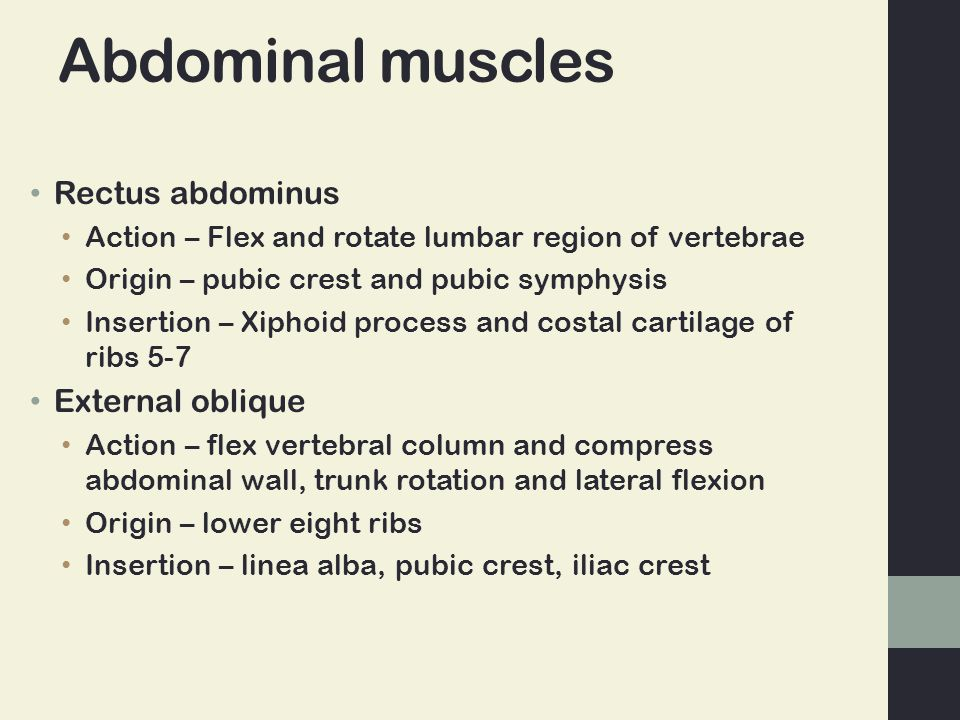 Abdominal muscles Rectus abdominus Action – Flex and rotate lumbar region of vertebrae Origin – pubic crest and pubic symphysis Insertion – Xiphoid pr
