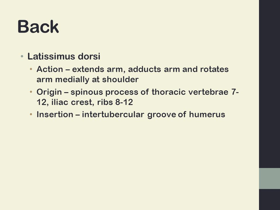 Back Latissimus dorsi Action – extends arm, adducts arm and rotates arm medially at shoulder Origin – spinous process of thoracic vertebrae 7- 12, ili