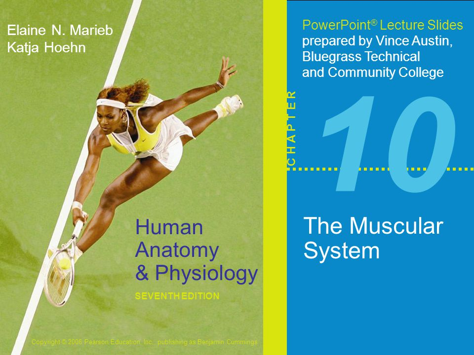 Copyright © 2006 Pearson Education, Inc., publishing as Benjamin Cummings Interactions of Skeletal Muscles  Skeletal muscles work together or in opposition  Muscles only pull (never push)  As muscles shorten, the insertion generally moves toward the origin  Whatever a muscle (or group of muscles) does, another muscle (or group) undoes