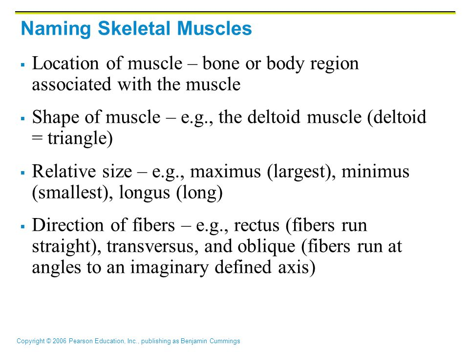 Copyright © 2006 Pearson Education, Inc., publishing as Benjamin Cummings Naming Skeletal Muscles  Number of origins – e.g., biceps (two origins) and triceps (three origins)  Location of attachments – named according to point of origin or insertion  Action – e.g., flexor or extensor, as in the names of muscles that flex or extend, respectively