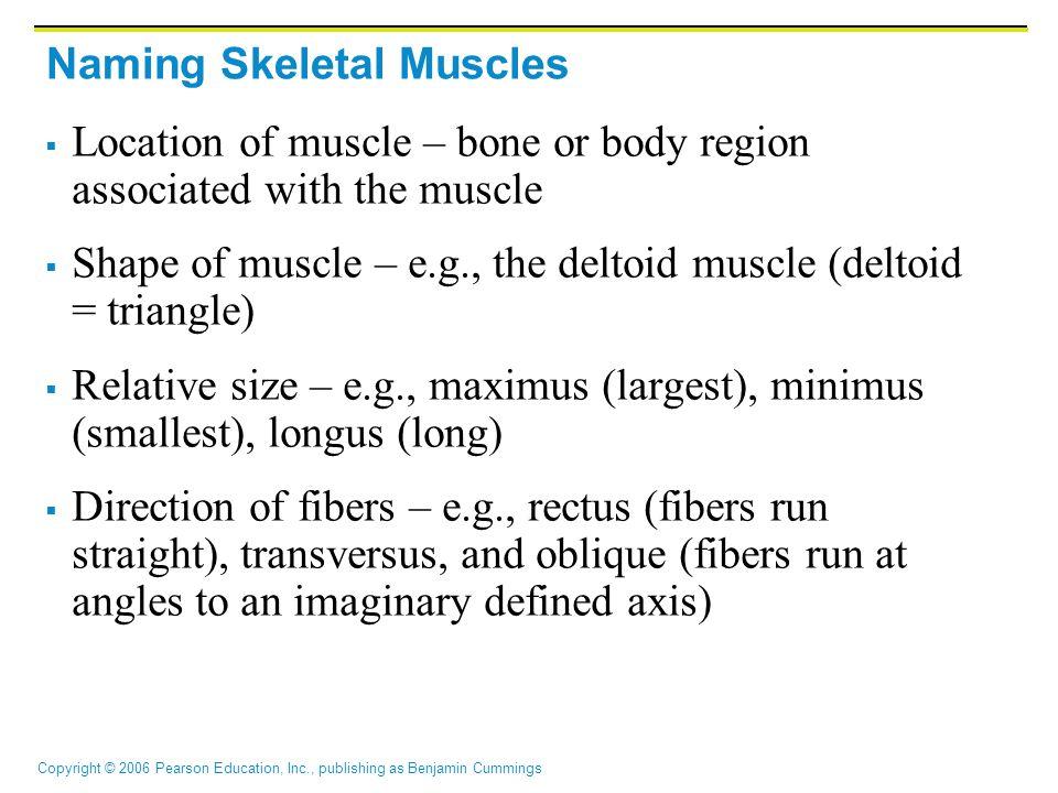 Copyright © 2006 Pearson Education, Inc., publishing as Benjamin Cummings Extrinsic Tongue Muscles Figure 10.7c