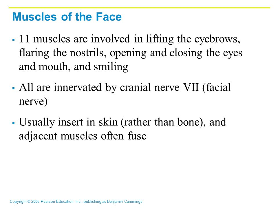 Copyright © 2006 Pearson Education, Inc., publishing as Benjamin Cummings Muscles of the Scalp, Face, and Neck Figure 10.6