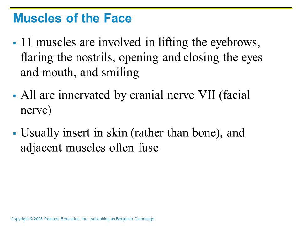 Copyright © 2006 Pearson Education, Inc., publishing as Benjamin Cummings Trunk Movements: Deep Back Muscles Figure 10.9d