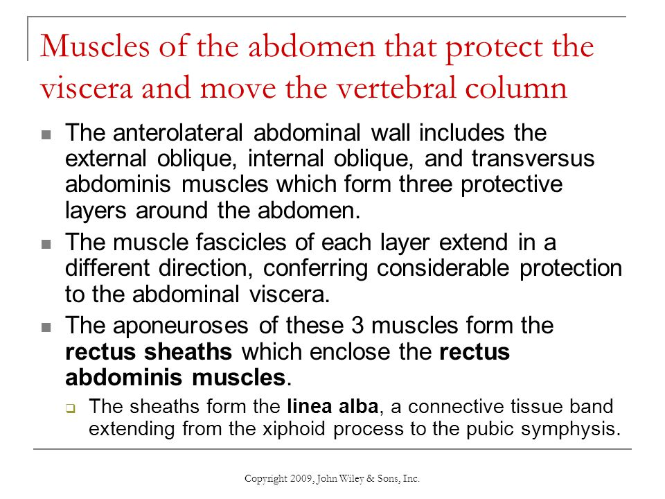Copyright 2009, John Wiley & Sons, Inc. Muscles of the abdomen that protect the viscera and move the vertebral column The anterolateral abdominal wall