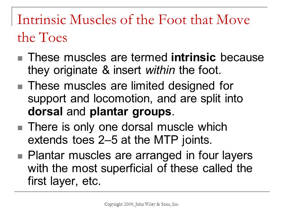 Copyright 2009, John Wiley & Sons, Inc. Intrinsic Muscles of the Foot that Move the Toes These muscles are termed intrinsic because they originate & i