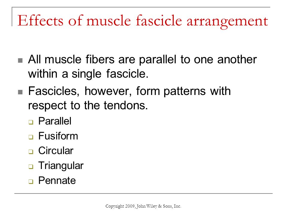Copyright 2009, John Wiley & Sons, Inc. Effects of muscle fascicle arrangement All muscle fibers are parallel to one another within a single fascicle.
