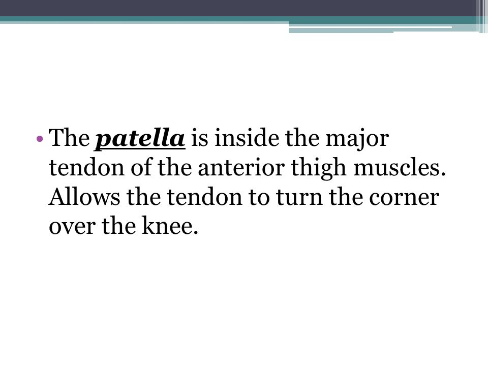 The patella is inside the major tendon of the anterior thigh muscles.