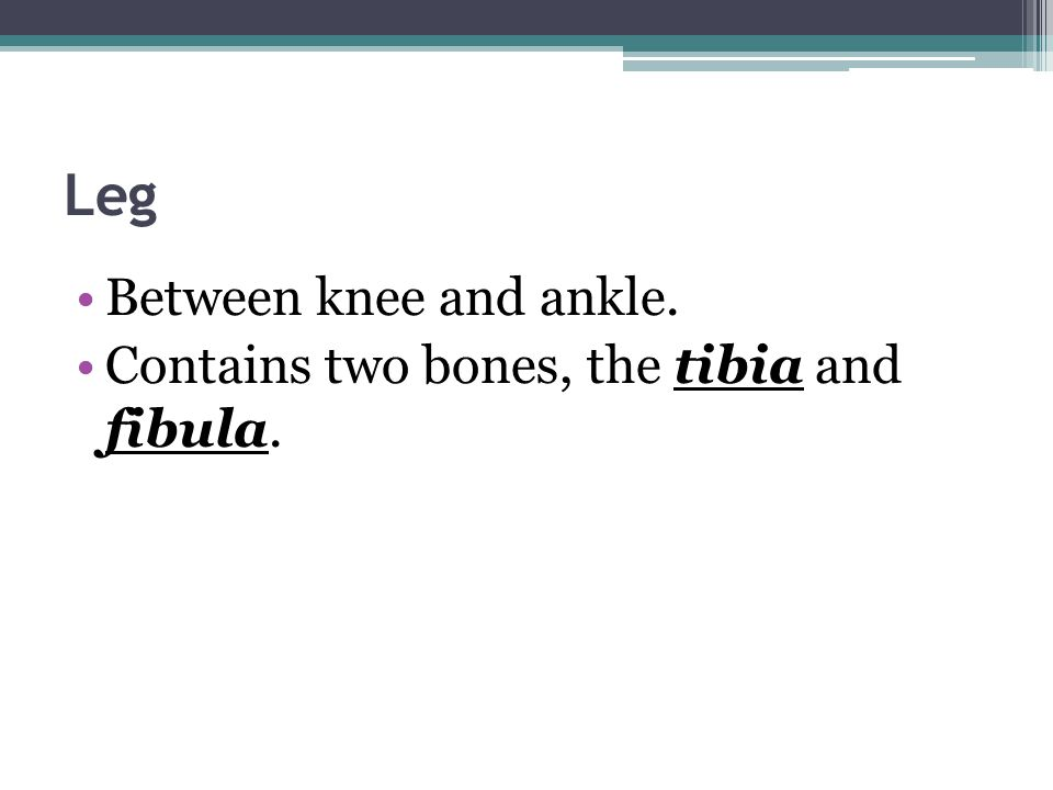 Leg Between knee and ankle. Contains two bones, the tibia and fibula.