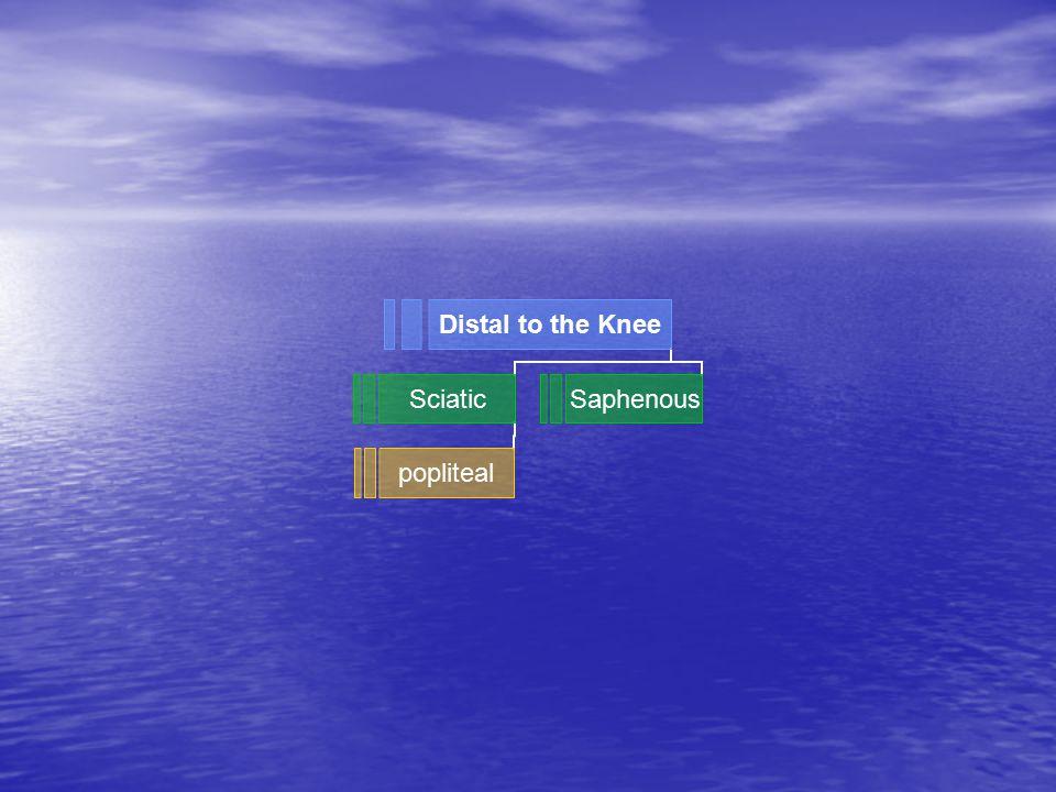 Distal to the Knee Sciatic popliteal Saphenous