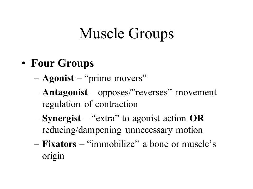 Muscles Inferior to the Pelvic Floor Two sphincter muscles allow voluntary control of urination (sphincter urethrae) and defecation (external anal sphincter) The ischiocavernosus and bulbospongiosus assist in erection of the penis and clitoris