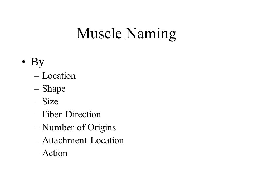 Naming Skeletal Muscles Location of muscle – bone or body region associated with the muscle Shape of muscle – e.g., the deltoid muscle (deltoid = triangle) Relative size – e.g., maximus (largest), minimus (smallest), longus (long) Direction of fibers – e.g., rectus (fibers run straight), transversus, and oblique (fibers run at angles to an imaginary defined axis)