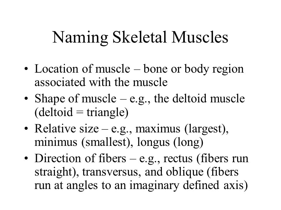 Naming Skeletal Muscles Number of origins – e.g., biceps (two origins) and triceps (three origins) Location of attachments – named according to point of origin or insertion Action – e.g., flexor or extensor, as in the names of muscles that flex or extend, respectively