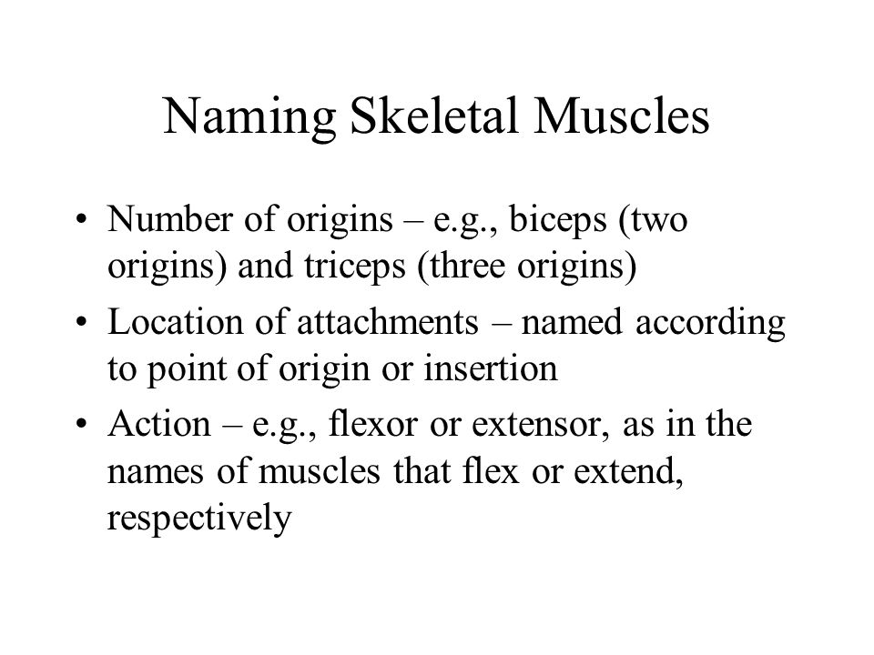 Muscles of the Face 11 muscles are involved in lifting the eyebrows, flaring the nostrils, opening and closing the eyes and mouth, and smiling All are innervated by cranial nerve VII (facial nerve) Usually insert in skin (rather than bone), and adjacent muscles often fuse