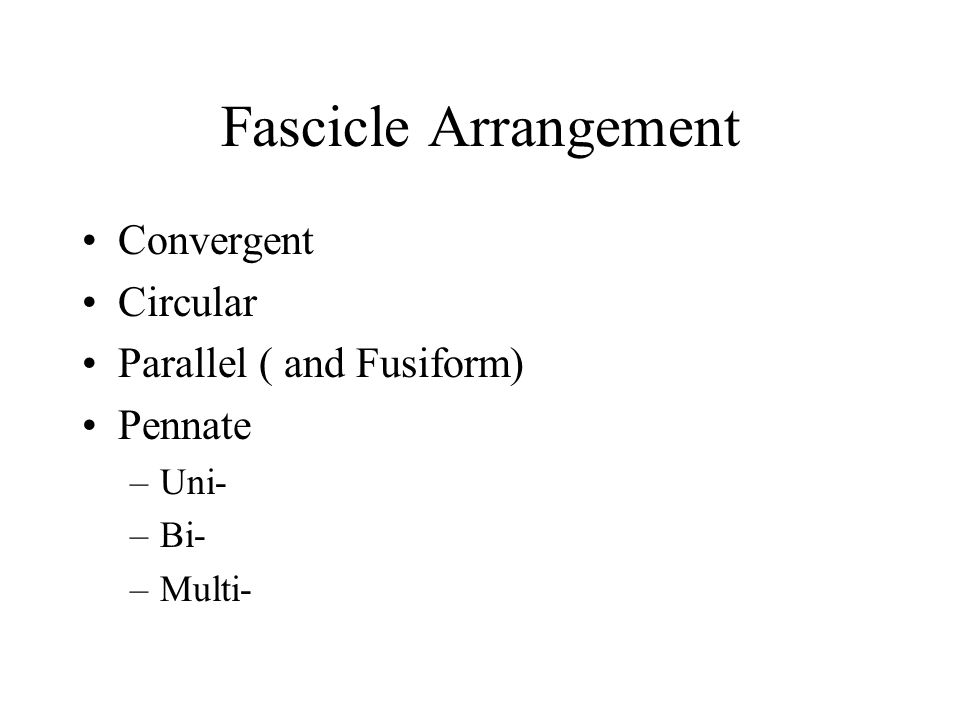 Arrangement of Fascicles Convergent – fascicles converge from a broad origin to a single tendon insertion (e.g., pectoralis major) Circular – fascicles are arranged in concentric rings (e.g., orbicularis oris)